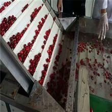 6xy-2樱桃保鲜分选 大樱桃预冷机选果分级机