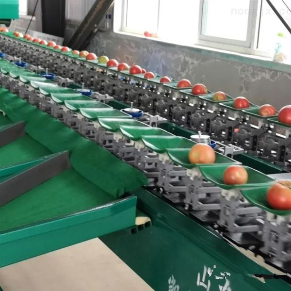 四川猕猴桃分级机 水果分果机自动分选机