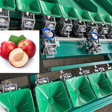 XGJ-SZZ高效油桃选果机全自动称重大小分选机 厂家