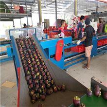 XGJ-DN福建油竹果分级机山竹挑大小的机器功能齐全