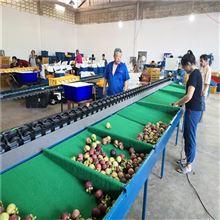XGJ-DN广西山竹分选机水果分选好帮手一机多用