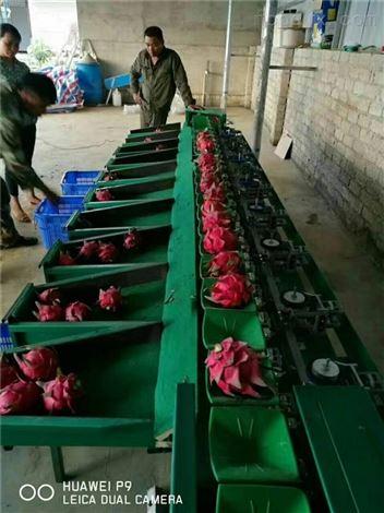 南宁火龙果分拣机 广西选水果大小的机器