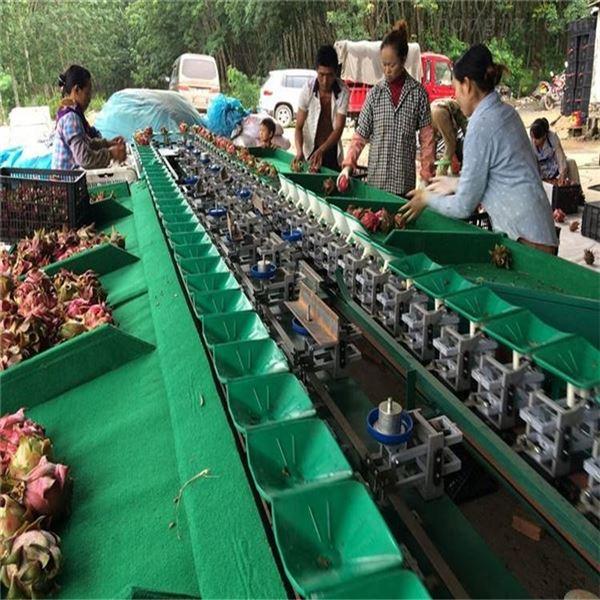 贵州水果分大小的设备 火龙果分拣机