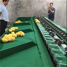 XGJ-SZ广西百色芒果选果机 机械式重量分选效率高
