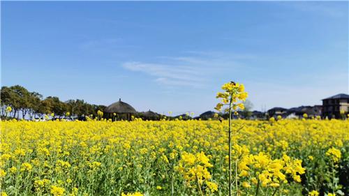中国美丽休闲乡村短视频大赛颁奖活动在江苏举行