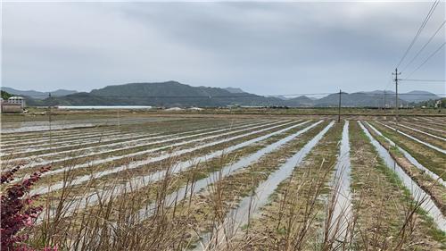 青岛:新技术助力 让大户种粮更轻松