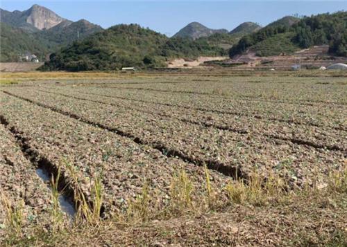 全国春耕种子供应充足价格稳定