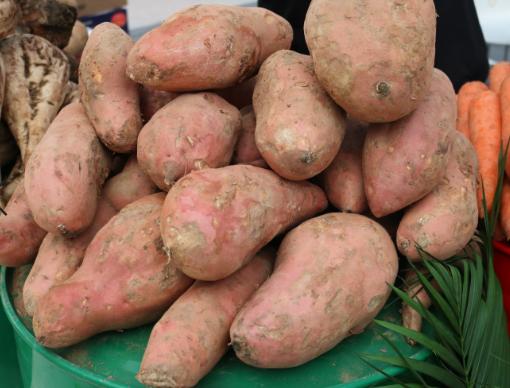 加强技术调研交流和机具选型,徐州农机加快推进甘薯项目进度