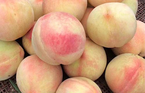 """6月8日:""""农产品批发价格200指数""""比昨天下降0.02个点"""