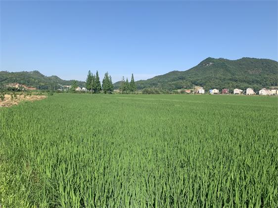 四川农业科技展新闻发布会今日召开:2021年9月10-12日于成都举办