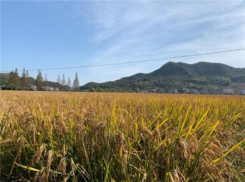 7月中旬發放完畢!貴州省印發2021年實際種糧農民一次性補貼資金發放實施方案