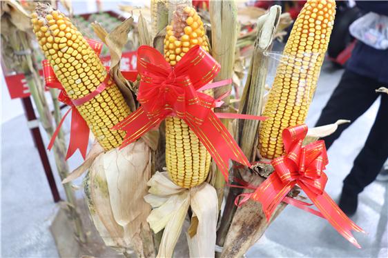 山東省關于公開征求2021年農業機械專項鑒定大綱草案意見的通知(鮮食玉米收獲機等)