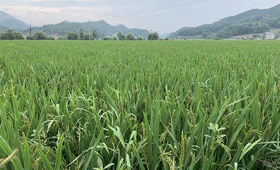 强化政策保障支持粮食生产工作推进视频会召开