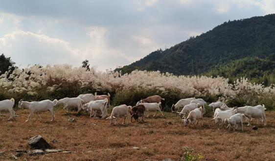 2021 中國(滄州)畜牧產業展覽會將于11月26-27日舉辦