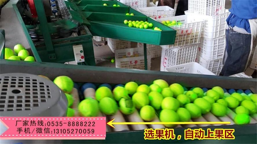 云南青枣分选机    青枣分选机移动方便      青枣分选机易于维修